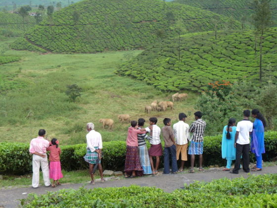 Man-elephant conflict in alarming stage in Bengal: Forest Dept