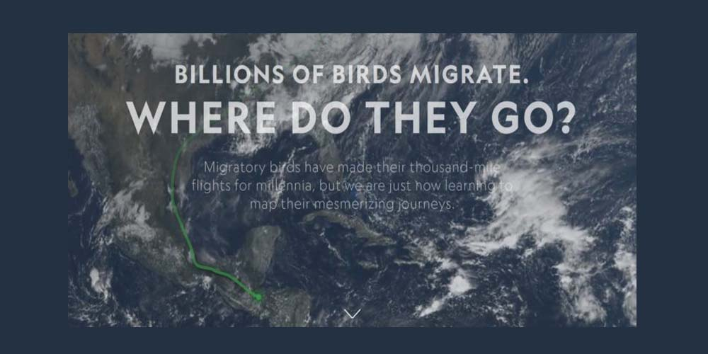 Useful Chatbots, Less-Is-More Tables and Data Mapping Billions of Birds