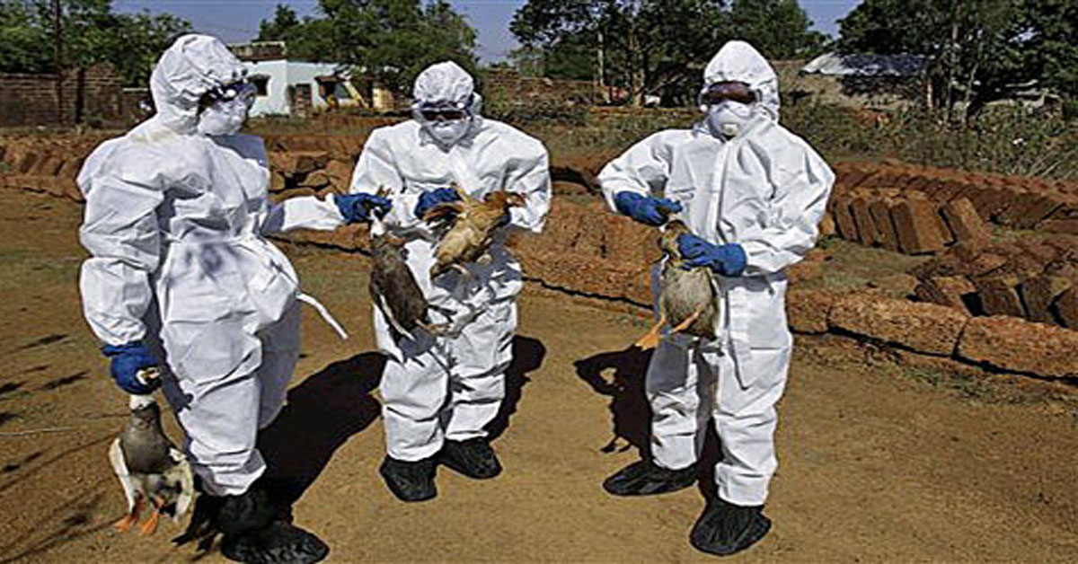 Amid Bird Flu Scare, Centre, States Step Up Efforts To Contain Spread