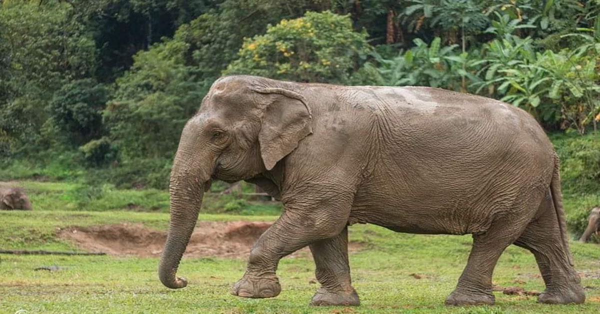 Rampant Killing of Elephants in India must be Prevented