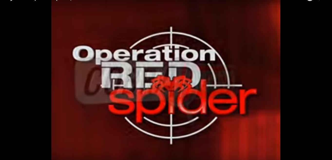 Spectr News Theme